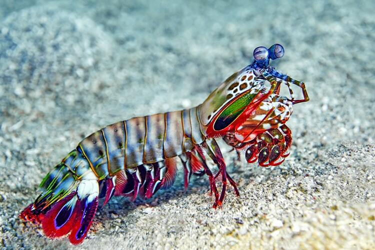 Read more about the article Mantis Shrimp-Inspired Camera