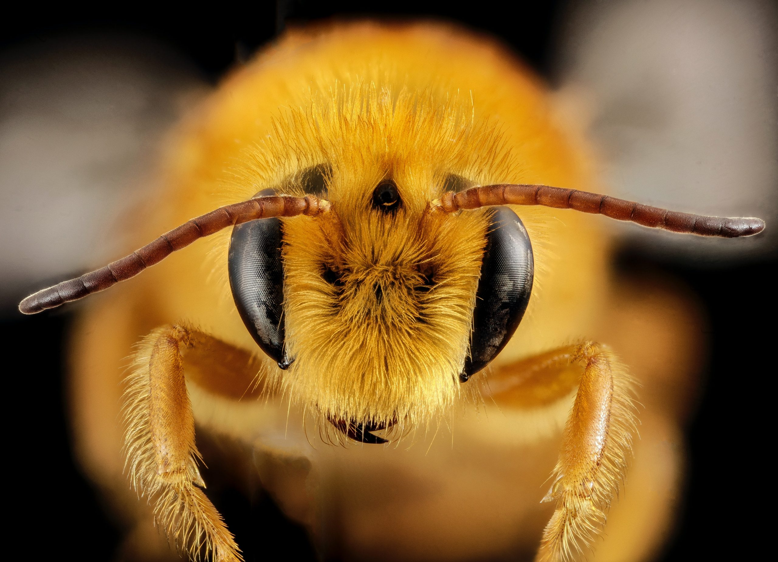 Read more about the article Buzz-pollination: The Secret Handshake Between Flowers and Bees